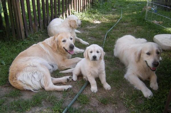 Charlie, Agi, Amy a Mary